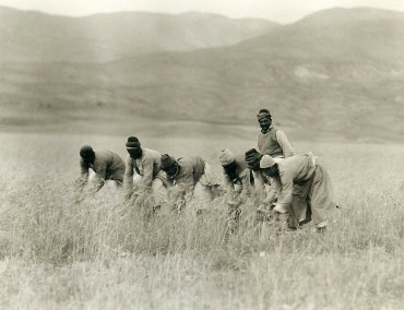 Kerr, Armenian men reaping wheat