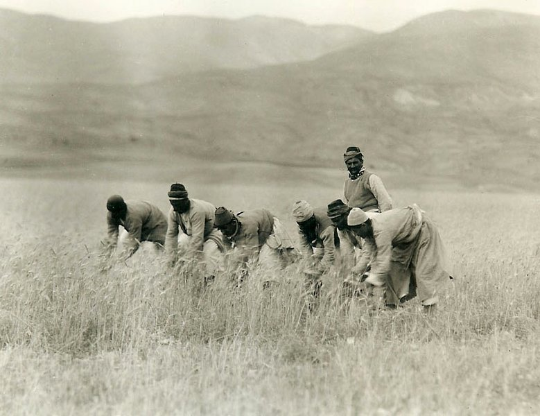 Kerr, Armenian men reaping wheat